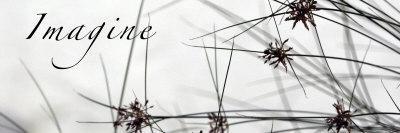 https://imgc.artprintimages.com/img/print/imagine-sweet-grass_u-l-p23dmt0.jpg?p=0
