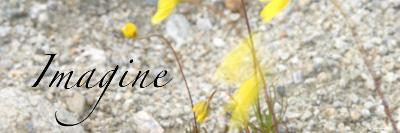 Imagine: Yellow Daisy-Nicole Katano-Photo