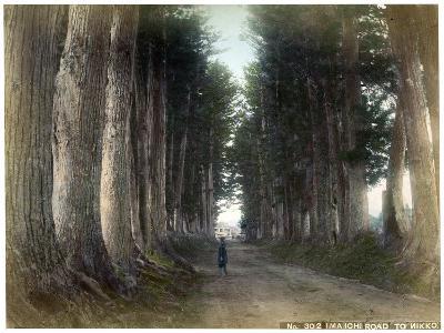 Imaichi Road at Nikko, Japan, Early 20th Century--Giclee Print