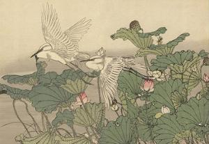 Egrets and Lotus by Imao Keinen