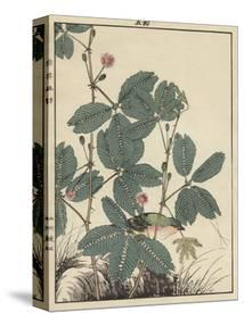 Sensitive Plant, Olive Sparrow by Imao Keinen