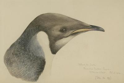 Immature Emperor Penguin, McMurdo Strait, 6 Feb, 1904-Edward Adrian Wilson-Giclee Print
