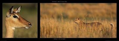 Impala and Leopard-Michel & Christine Denis-Huot-Art Print