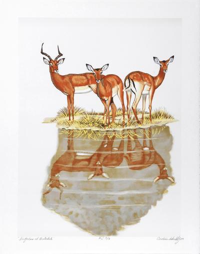 Impalas at Waterhole-Caroline Schultz-Collectable Print