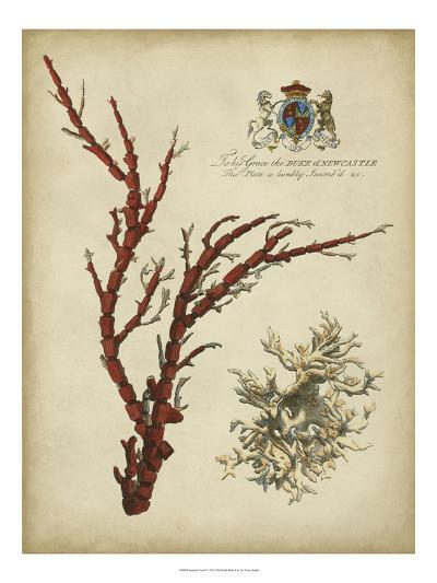 Imperial Coral I--Art Print