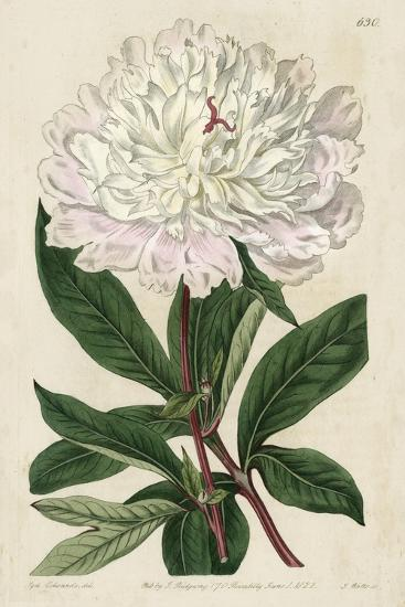 Imperial Floral I-Vision Studio-Art Print
