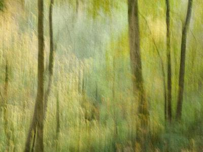 Impression of an Autumn Forest, North Lanarkshire, Scotland, UK, 2007-Niall Benvie-Photographic Print