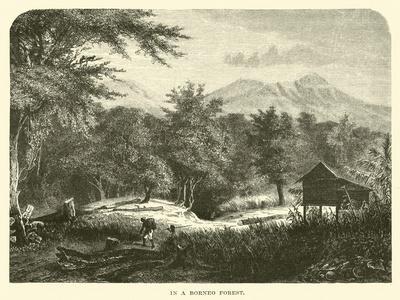 https://imgc.artprintimages.com/img/print/in-a-borneo-forest_u-l-ppi00h0.jpg?p=0