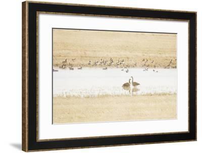 In a Prairie Pothole-Roberta Murray-Framed Photographic Print