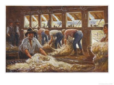 In an Australian Sheep Shearing Shed-Percy F^s^ Spence-Giclee Print