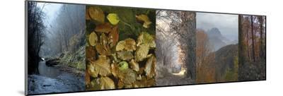 In Awe of Autumn II-Mary Karla-Mounted Print