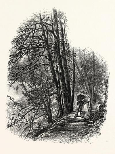 In Cliefden Woods, UK--Giclee Print