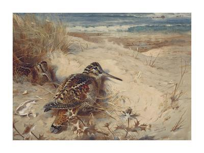 In From the North Sea-Archibald Thorburn-Premium Giclee Print