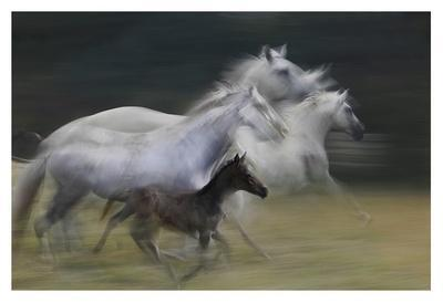 https://imgc.artprintimages.com/img/print/in-gallop_u-l-f8wbsk0.jpg?p=0