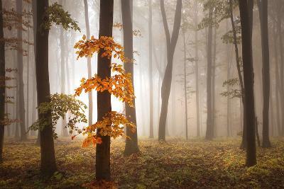In November Light-Franz Schumacher-Photographic Print