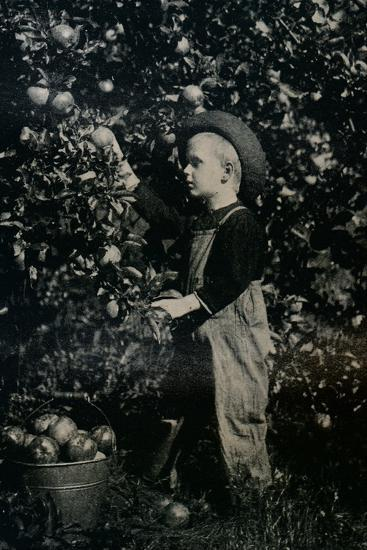 'In One Of Ontaario's Fruitful Orchards', c1934-Unknown-Photographic Print