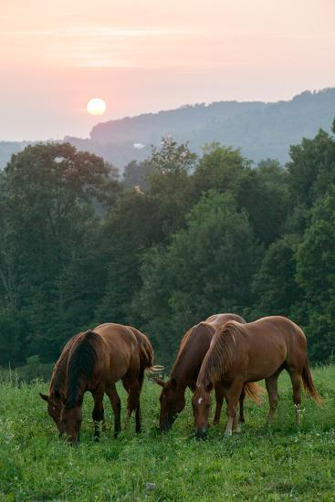 In Rural Hilly Farmland, a Team of Horses Feed on Grass at Sunset-Eric Kruszewski-Photographic Print