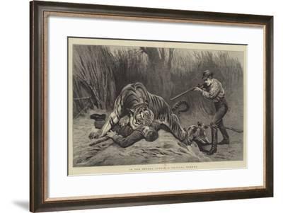 In the Bengal Jungle, a Critical Moment-John Charlton-Framed Giclee Print