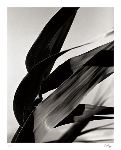 In the Breeze-Andrew Geiger-Collectable Print
