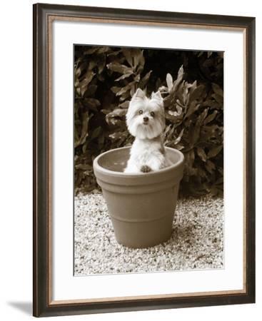 In the Garden-Jim Dratfield-Framed Photo