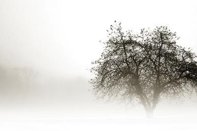 In the Mist I-Alan Hausenflock-Photographic Print