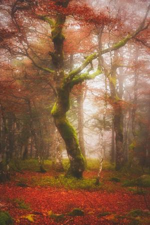 In the Mood of Autumn-Philippe Sainte-Laudy-Photographic Print