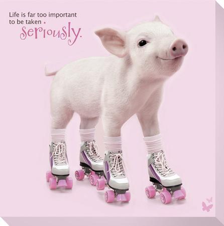 in-the-pink-roller-skating-pig