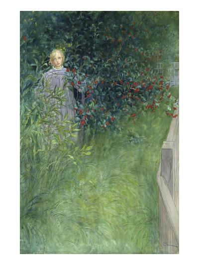 In the Rose Hip Hedge-Carl Larsson-Giclee Print