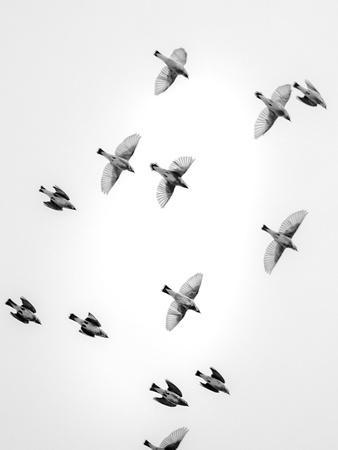 https://imgc.artprintimages.com/img/print/in-the-sky-1_u-l-q1g6aa90.jpg?p=0
