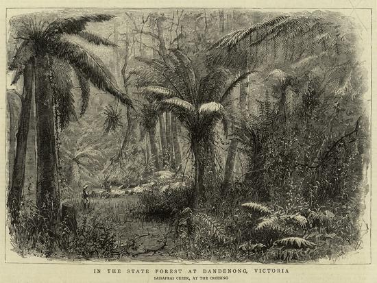 In the State Forest at Dandenong, Victoria--Giclee Print