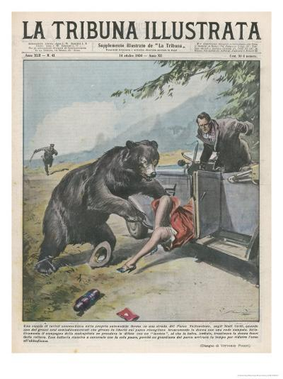 In Yellowstone a Bear Pats a Woman in a Car-Vittorio Pisani-Giclee Print