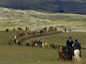 Icelandic Horses and Riders, Riding Near Landmannalaugar, Iceland by Inaki Relanzon