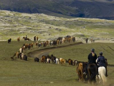 Icelandic Horses and Riders, Riding Near Landmannalaugar, Iceland