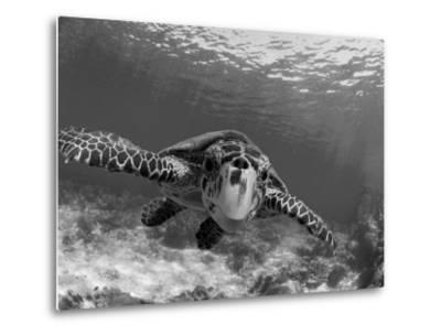 Sea Turtle, Swimming Underwater, Nosy Be, North Madagascar