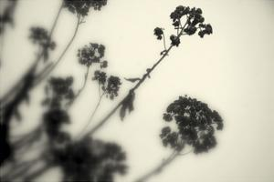 Photography/Landscape 154 by Inc DAG