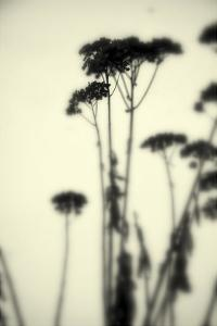 Photography/Landscape 156 by Inc DAG