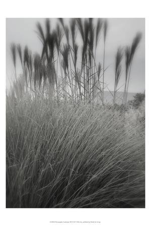 Photography/Landscape 180