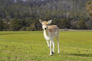 Deer Look by Incredi