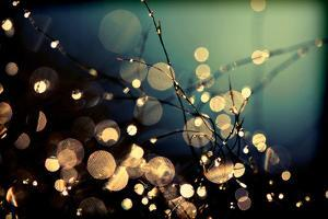 Fairies in My Garden by Incredi