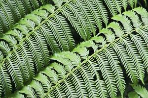 Green Fern by Incredi