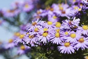 Purple Moods by Incredi