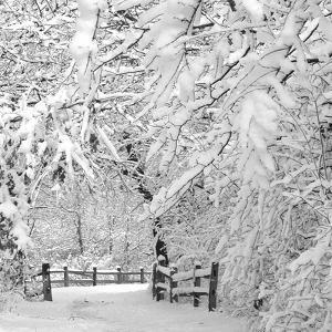 Winter Wonderland by Incredi