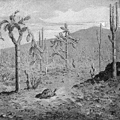 Indefatigable Island, Galapagos Archipelago, 1895--Giclee Print