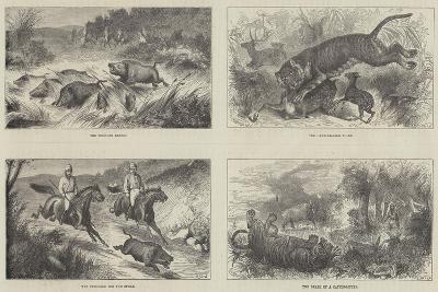 India and the Prince of Wales-Harrington Bird-Giclee Print