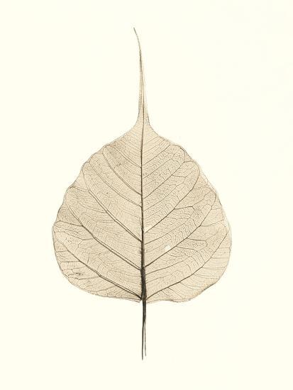 India Ficus-Alan Blaustein-Photographic Print