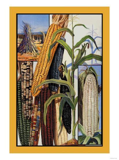Indian Corn--Art Print