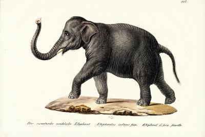 Indian Elephant, 1824-Karl Joseph Brodtmann-Giclee Print