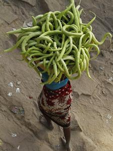 Indian Farmer Carries Cucumbers to Sell in the Market on the Outskirts of Allahabad, India