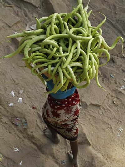 Indian Farmer Carries Cucumbers to Sell in the Market on the Outskirts of Allahabad, India--Photographic Print