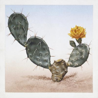 Indian Fig Opuntia (Opuntia Ficus-Indica)--Giclee Print